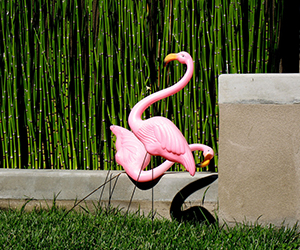flamingoshumiliated